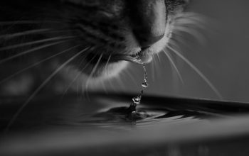 Your Cat Will Be Happy to Drink with these 4 Battery Operated Cat Water Fountain