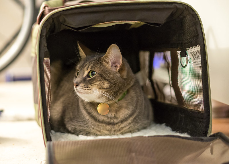 Best Cat Carrier for Long Car Trips