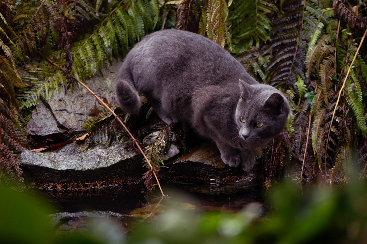 Are Fern Toxic to Cats?