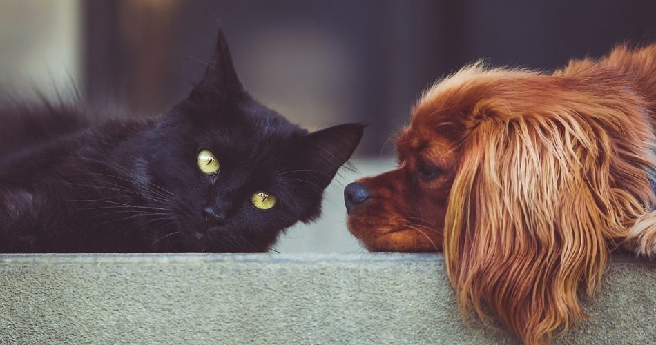 Can Dogs and Cats Mate