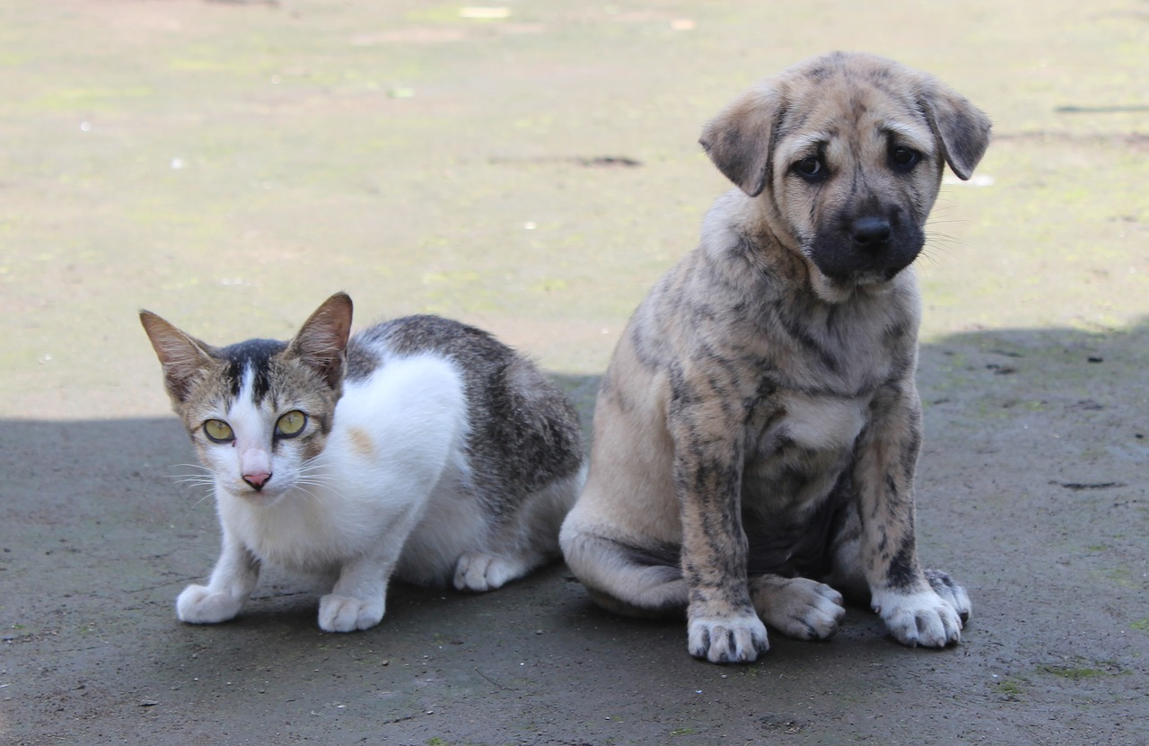 Can Dogs and Cats Mate? Science says no - Image: Rohit Tripathi from Pixabay