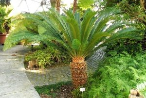 Are ferns toxic to cats? Sago Palm is extremly toxic to cats