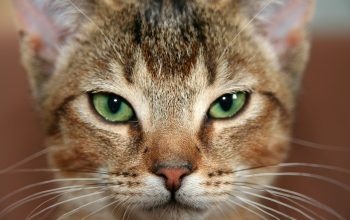 23 Myths about Cats that Really Need to Be Dissipated