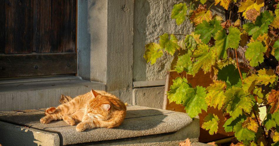 Cat Lying Under the Sun