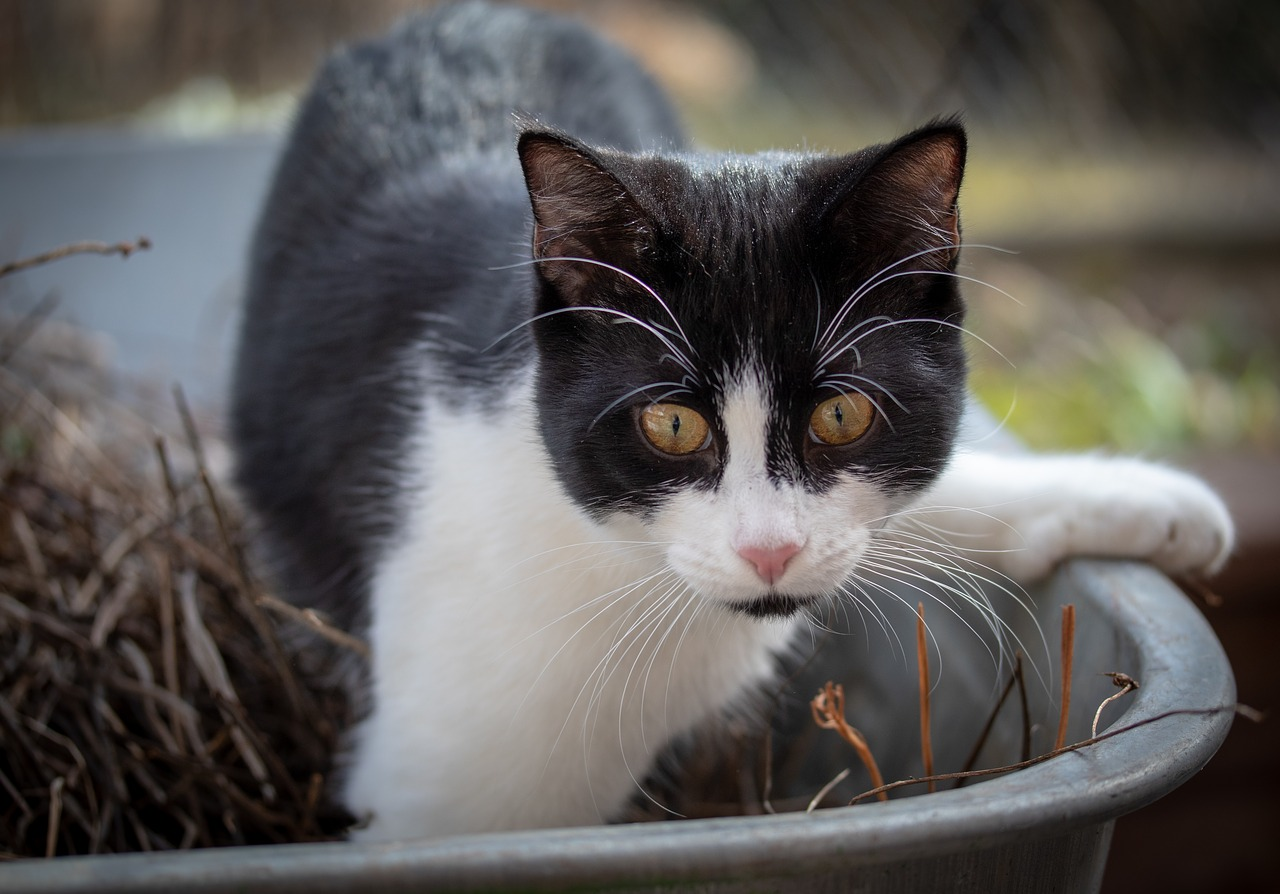 Moving a cat's litter box in the garden