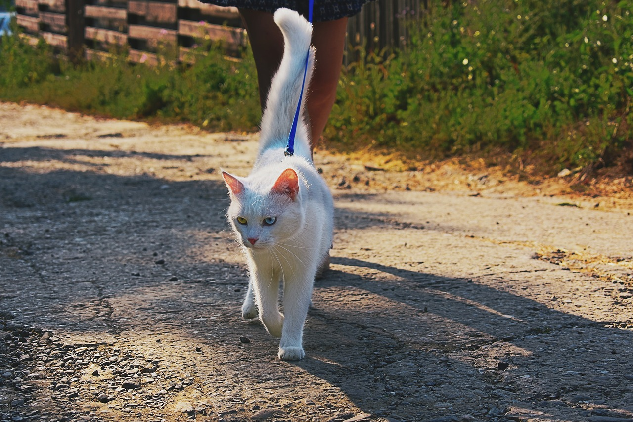 How to train a cat: Cat on a Leash