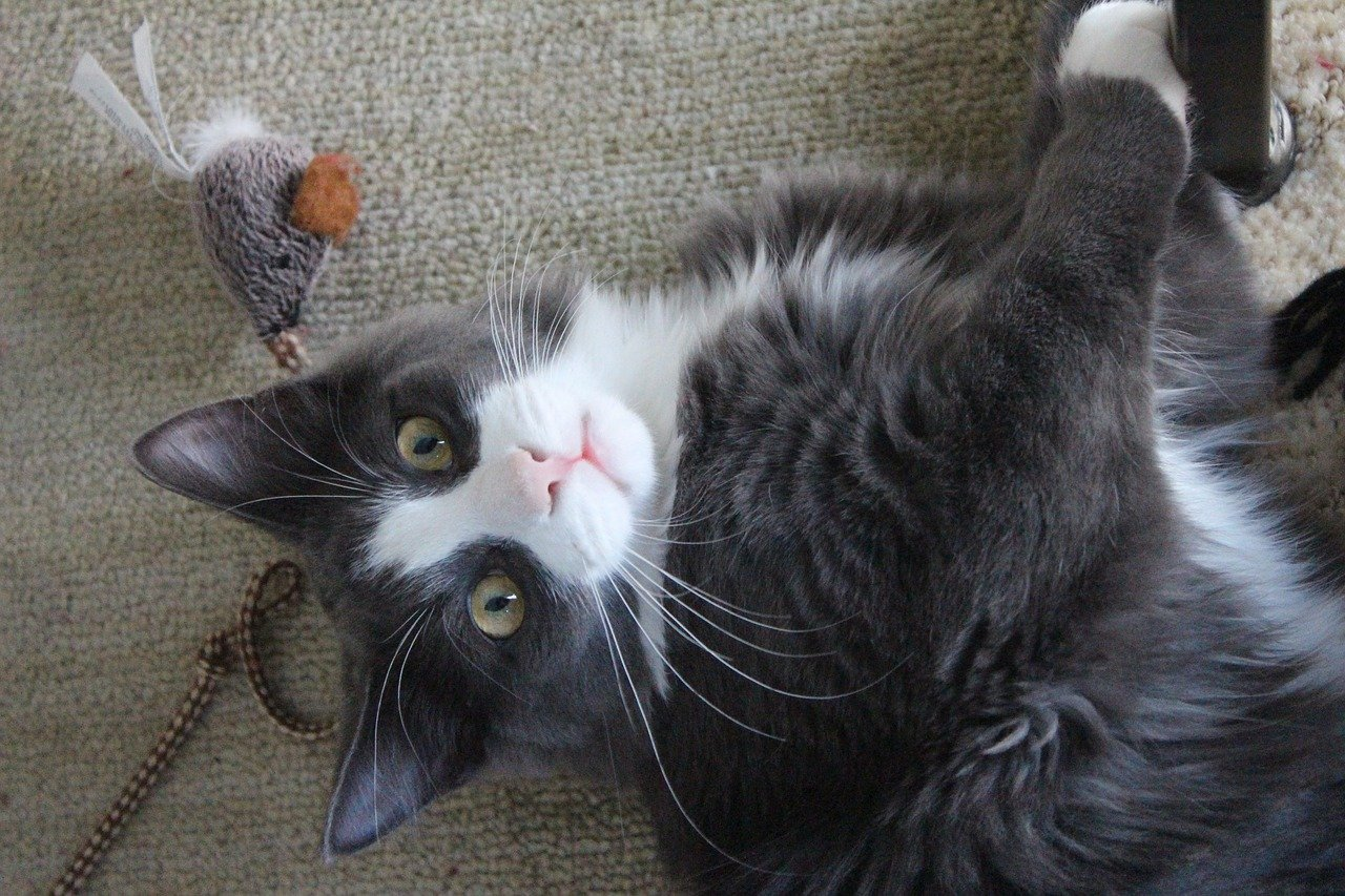 How to treat anxiety in cats: make a toy for him to have fun with