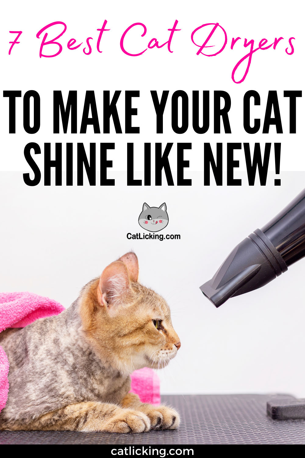 Best Cat Dryers to Make your Cat Shine Like New!