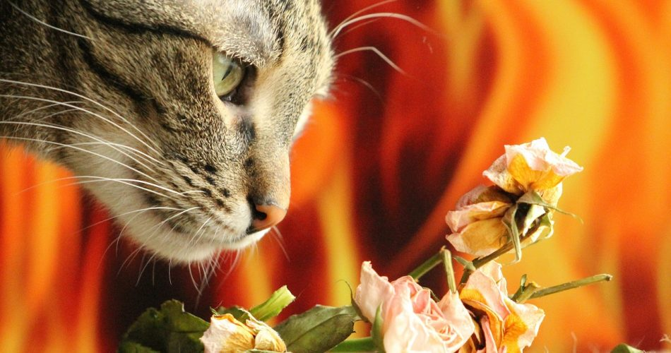 Cat Smelling