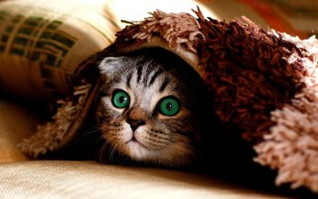 21 Tips to Protect your Cat from the Cold