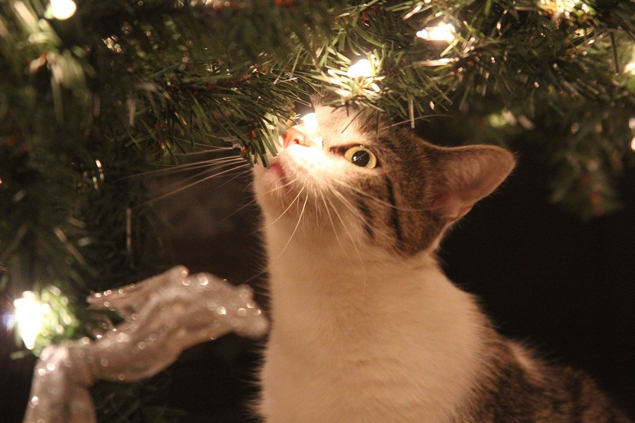 Why do cats love Christmas trees? Because of the shiny garlands of course! - Photo by Corrie Miracle from Pixabay