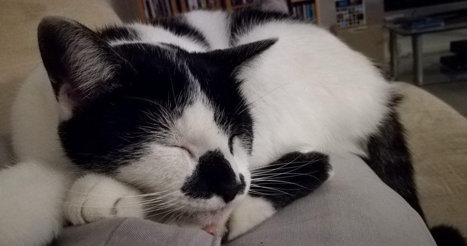 Little Kitty Sleeping