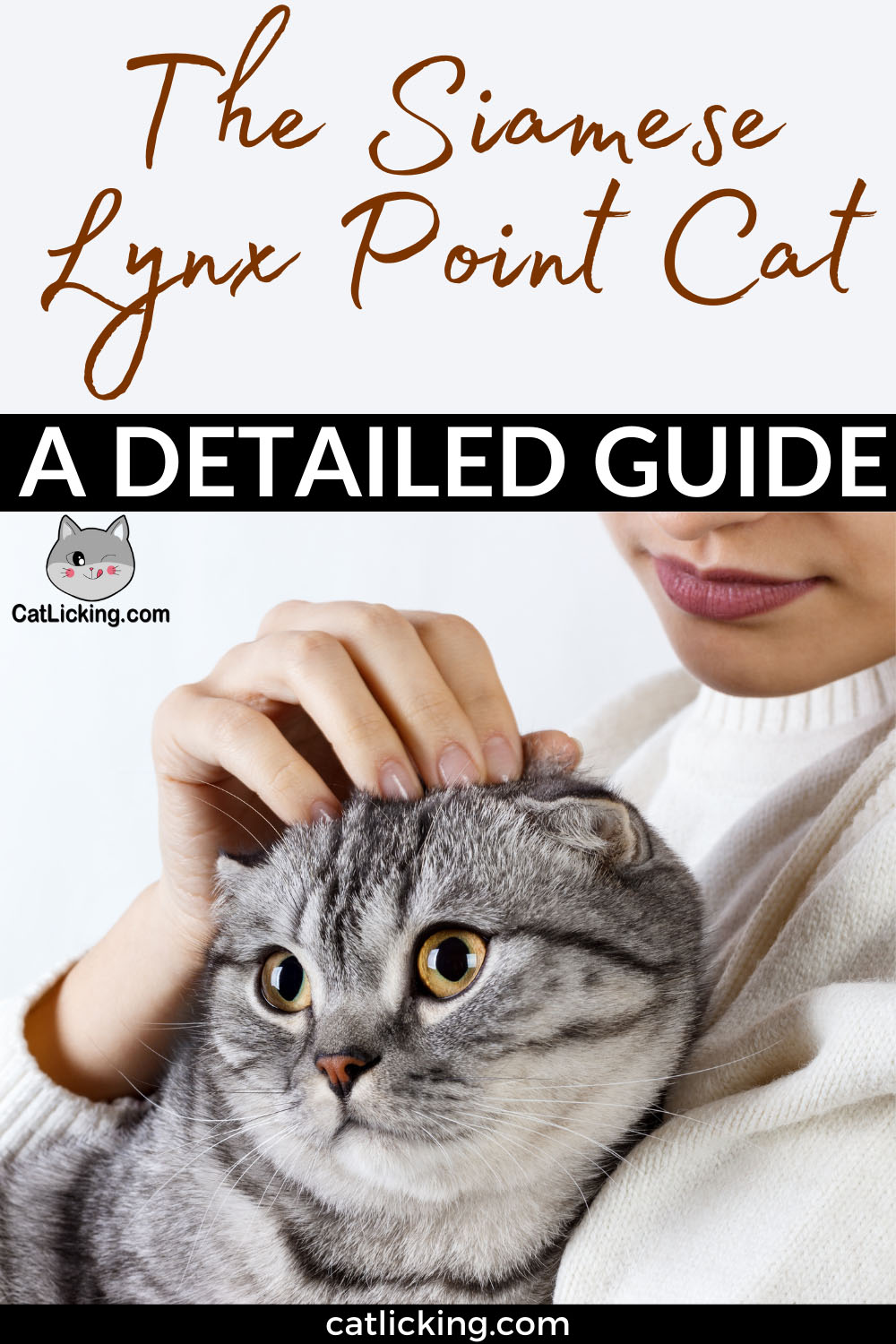 Siamese Lynx Point Cat, a Detailed Guide