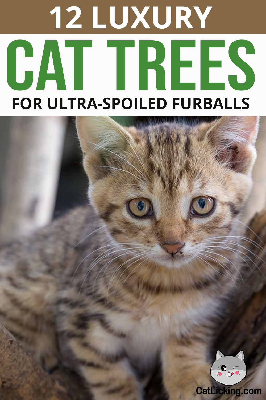 12 Luxury Cat Trees for Ultra-Spoiled Furballs
