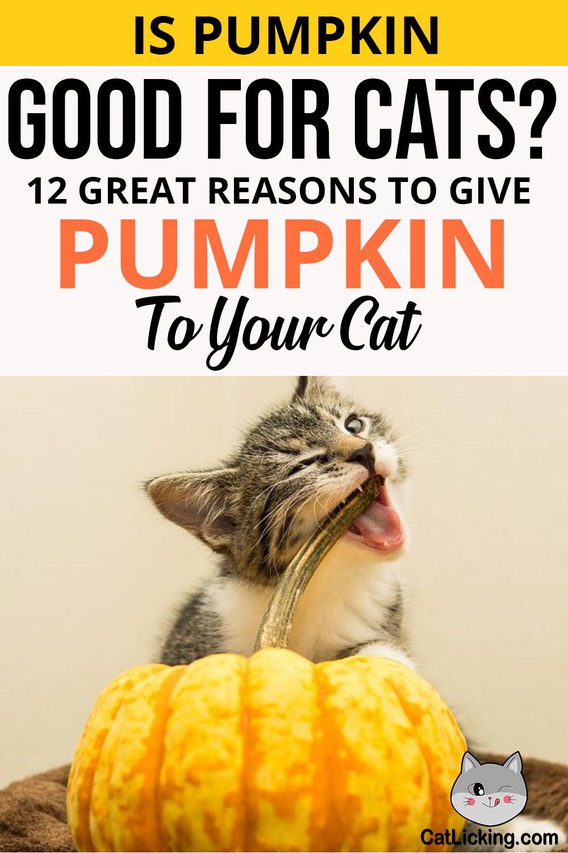 Is Pumpkin Good for Cats