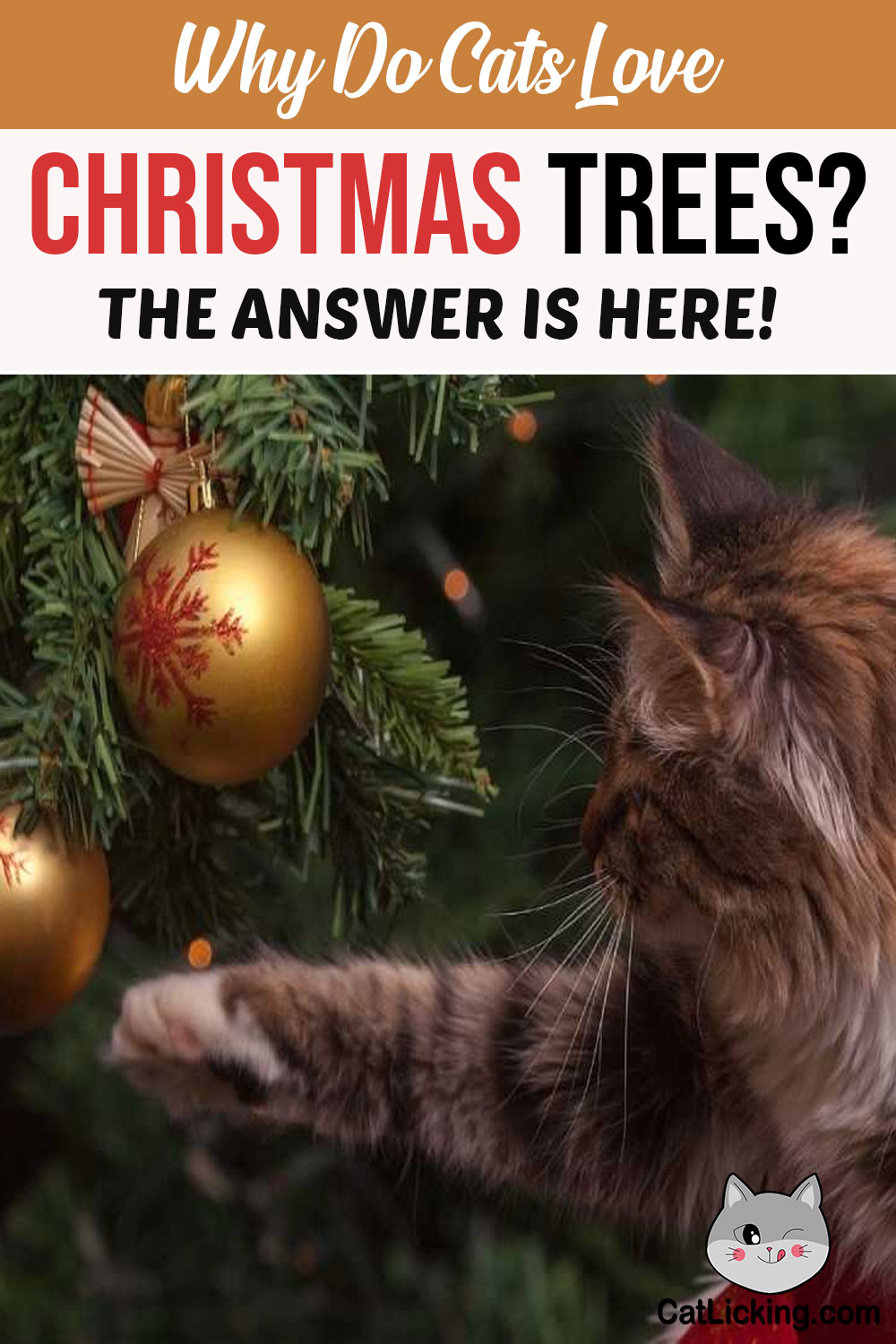 Why Do Cats Love Christmas Trees