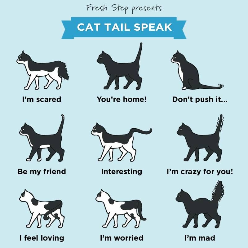 Cat Tail Speak: Decoding the Language of the Cat Tail