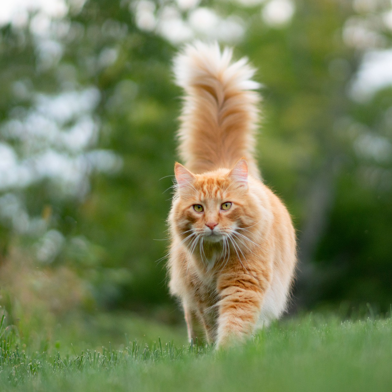Angry or relaxed? A cat's tail says a lot about his mood
