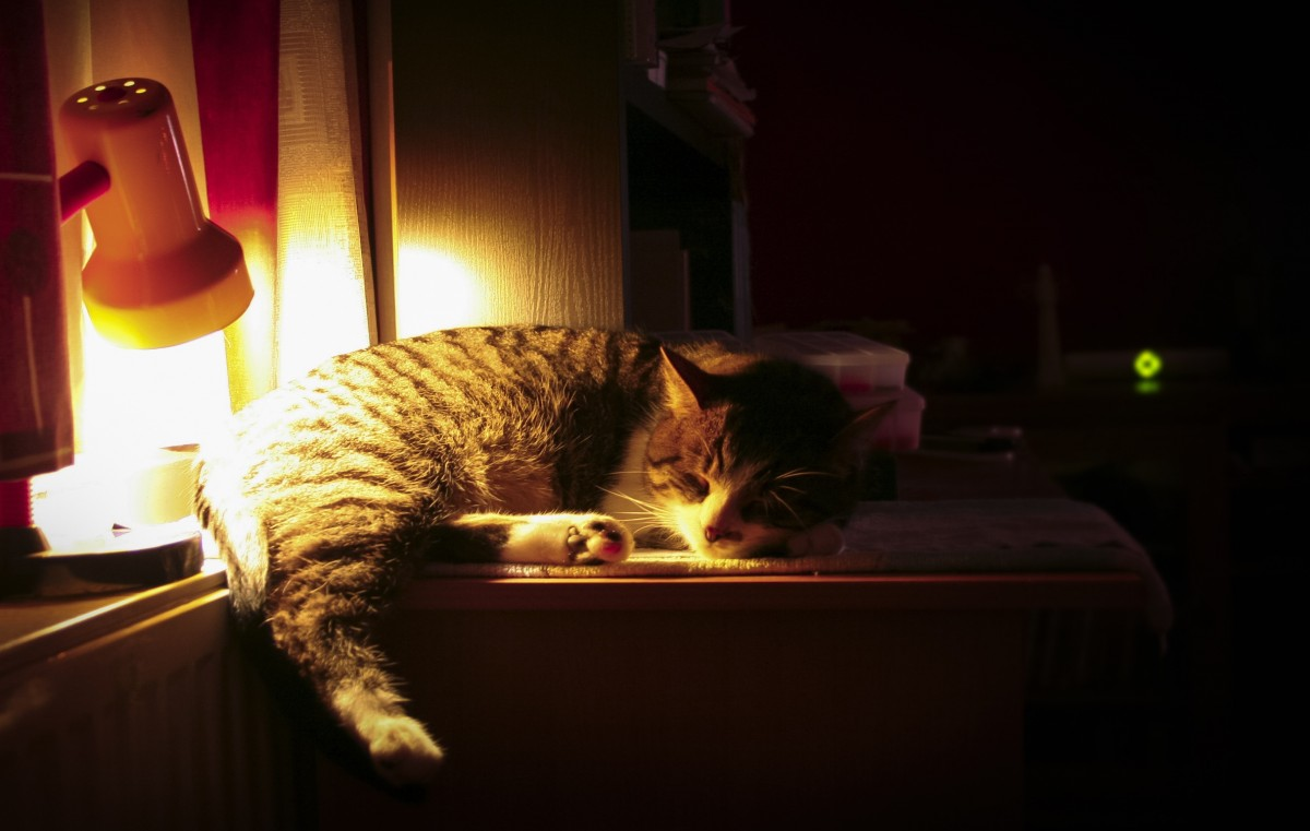 Cats do a lot of things at night... and sometimes they sleep!