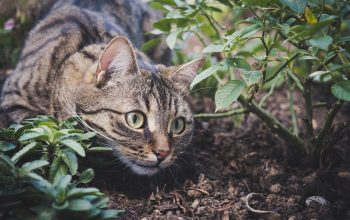 Indoor Cat Vs. Outdoor Cat: Things You Should Know Before Choosing