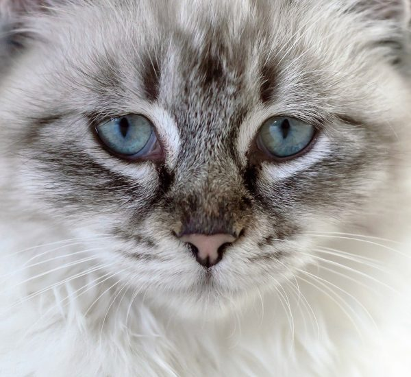 Watery Eyes Cat