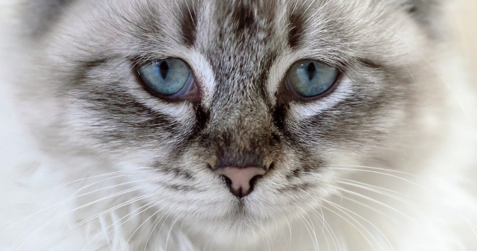 Watery Eyes Cat