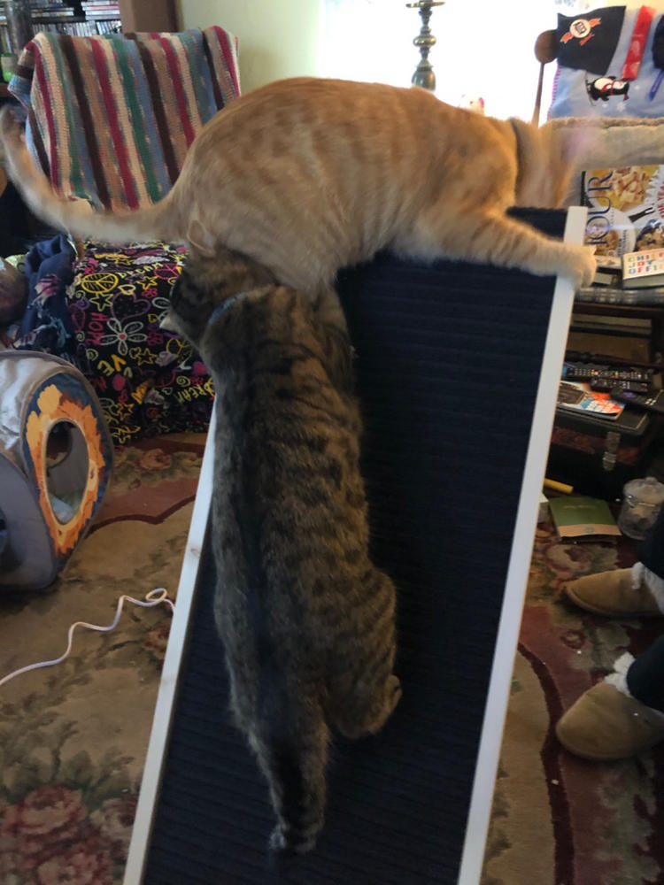 2 cats can use the Scratchy Ramp at the same time without any problem!