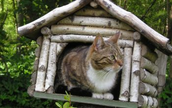 4 Outdoor Cat Houses to Keep Kitty Warm When He's Outside