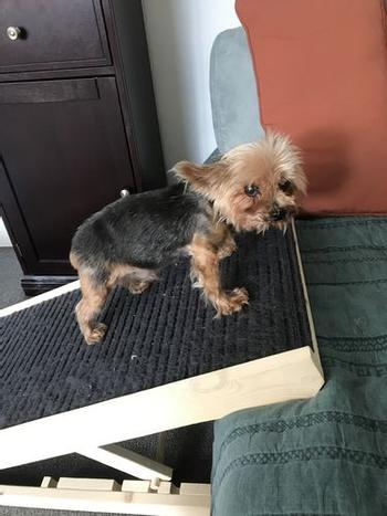 Do you own a small dog? No problem, he can also use the Scratchy Ramp.
