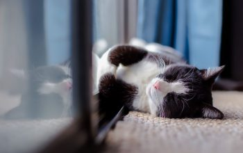 How to Get a Cat Go Back Home: 14 Useful Tips