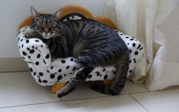 7 FurHaven Cat Beds Dedicated to Kitty Comfort