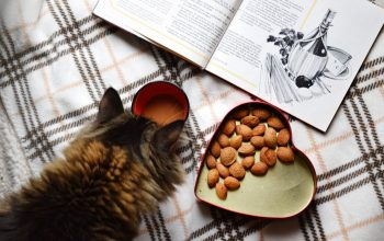 Are Nuts Toxic to Cats?