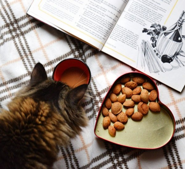 Cat and Nuts
