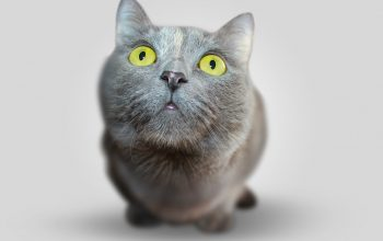 Cat's Eyes Meaning