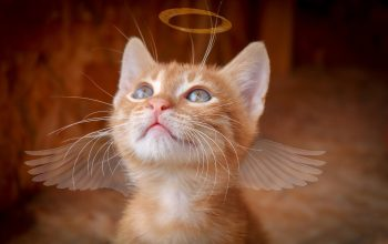 How to Tell If Your Cat Is Dying: 12 Cat Dying Signs to Look Out For