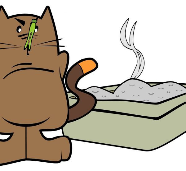 Bad Smell Cat