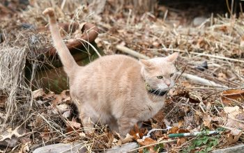 Top 5 Reasons Your Cat Is Peeing Outside his Litterbox (And How to Stop It!)